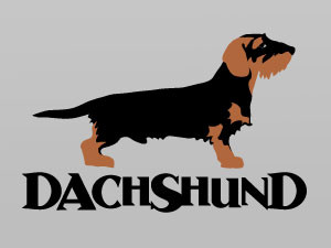 wirehaired dachshund profile..