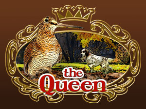 The Woodcock – Queen of the forest