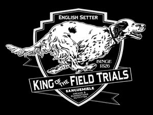 Setter. The king of the field trails