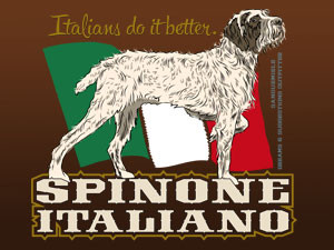 Spinone Italiano – The oldest of the pointing dogs in the world