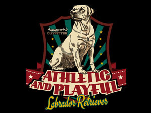 Labrador retriever, athletic and playful dog