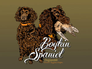 Boykin Spaniel, from the Pee Dee River, South Carolina